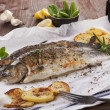 Grilled trouts. — Stock Photo