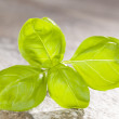 Basil isolated on stone background. — Stock Photo