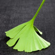 Ginkgo leaf isolated on black. — Stock Photo