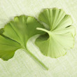 Ginkgo leaves on green background. — Stock Photo