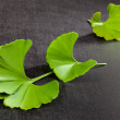 Ginkgo. — Stock Photo