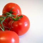 Постер, плакат: Vine Ripened Tomatoes