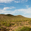 Desert Landscape — Stock Photo #29279531