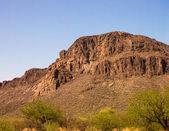 Sonoran Desert Landscape — Stock Photo