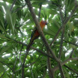 Parrot on a tree — Stock Photo