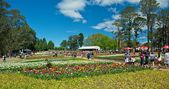 Blossom of tulips at Floriade Festival — Stock Photo