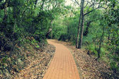 Trail in Tomaree National Park — Stock Photo