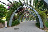 Botanical garden in Brisbane — Stock Photo