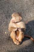 Monkeys — Foto de Stock