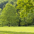 Bright green trees in the park on a sunny day — Stock Photo
