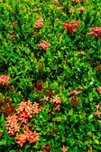 Red flower and leaves pattern — Stock Photo