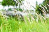 Flower of grass pattern — Stock Photo