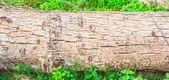 Timber wood surface — Photo