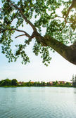 Tree and branch on lake — Stock Photo