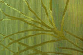 Gold branch striped wall cove — Stockfoto