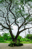 Old high tree at nature park — Foto Stock