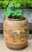 Lotus plant in old baked clay jar — Stock Photo