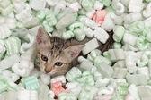 Katze spielen — Stockfoto