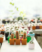 Succulent plants in colorful pots — Stock Photo