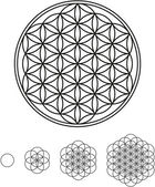 Flower Of Life Development — Stok Vektör