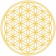 Flower of Life — Stock Vector #29122625