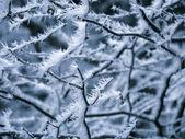 Frosty Rime — Stock Photo