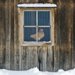 Hen House — Stock Photo