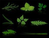 Herbs Black — Vecteur