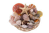 Sea gifts — Stock Photo