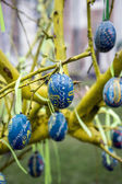 Spring holiday Easter — Stock Photo