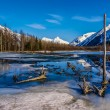 Breathtaking Beauty of an Alaskan Landscape with Partially Frozen Lake, Logs, Trees, and Mountains. — Stock Photo