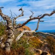 Постер, плакат: A Twisted Gnarly Dead Tree on Enchanted Rock in the Texas Hill Country