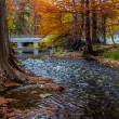 Постер, плакат: White Bridge and Stunning Fall Colors of Texas Cypress Trees Surrounding the Crystal Clear Texas Hill Country Streams Around the Guadalupe River