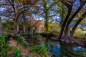 Stunning Fall Colors of Texas Cypress Trees Surrounding the Crystal Clear Texas Hill Country Streams Around the Guadalupe River. — Foto Stock