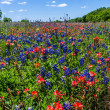 A Beautiful Wide Angle Shot of a Field Teeming with the Famous Texas Bluebonnet and Indian Paintbrush Wildflowers, in Texas. — Stock Photo
