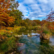 Large Cypress Trees with Stunning Fall Color Lining a Crystal Clear Texas Hill Country Stream. — Stock Photo