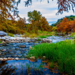 Stunning Fall Colors of Texas Cypress Trees Surrounding the Crystal Clear Texas Hill Country Pedernales Rivers. — Stock Photo #31046741