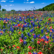 A Beautiful Field Blanketed with Bright Blue Texas Bluebonnets and Bright Orange Indian Paintbrush Wildflowers. — Stock Photo #31046859