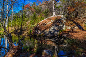 Colorful Giant Cypress Trees with Some Remaining Fall Foliage on Tranquil Hamilton Creek Covered with Large Granite Boulders and Lots of Orange Cyprus Leaves — Stock Photo