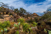 A Rugged Western Landscape in the Texas Hill Country. — Stock Photo