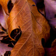 Closeup of Beautiful Intricate Fall Foliage. — Stock Photo