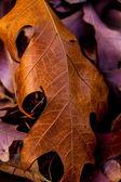 Closeup of Beautiful Intricate Fall Foliage. — Stock Photo