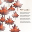 Maple leaf background — Stok Vektör