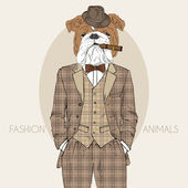 Dressed up english bulldog, in colors — Stock Vector