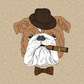English Bulldog with cigar — 图库矢量图片