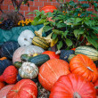 A lot ov various pumpkins — Stock Photo