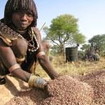 Hamer woman prepares sorghum for making beer. — Stock Photo