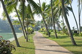Walking path in Kerala, India. — Stock Photo