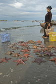 Vietnamese woman wait fishing boats on a beach with new catch of starfish in Mui Ne, Vietnam. — Stock Photo