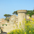 View of medieval castle in Tossa de Mar with gorse bush in the foreground, Spain. — Stock Photo